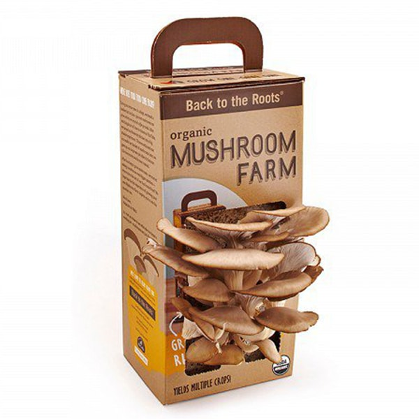 INOpets.com Anything for Pets Parents & Their Pets Mushroom Farm
