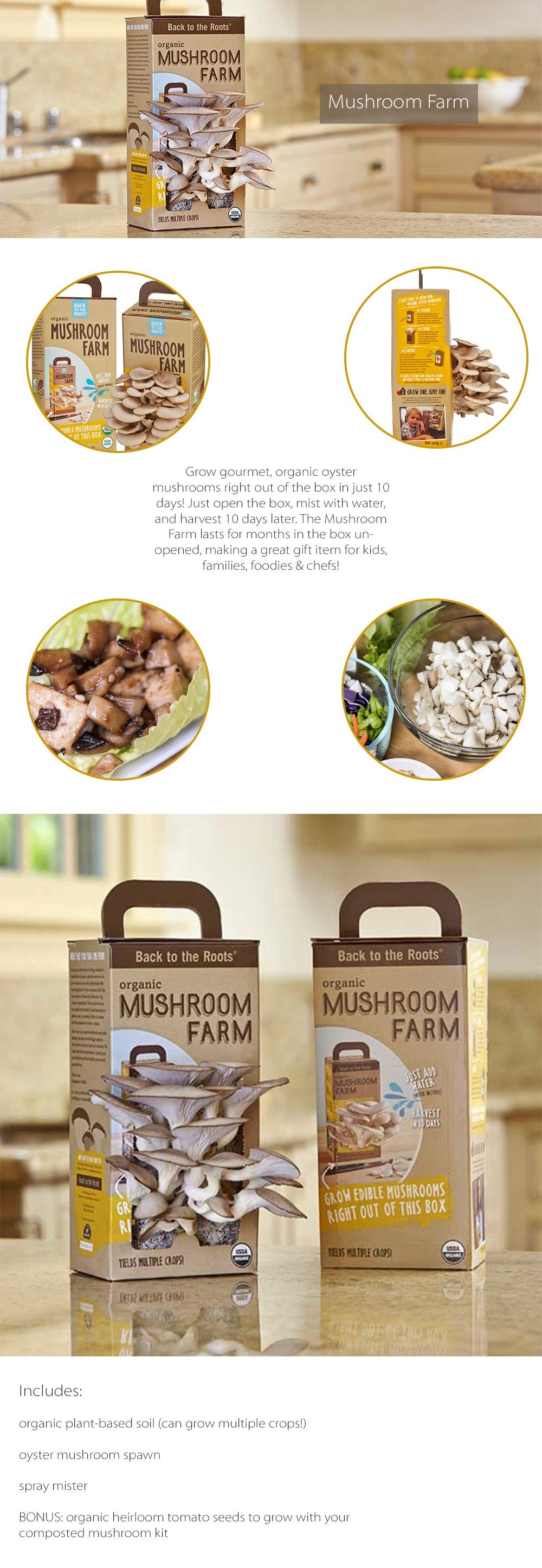 Mushroom Farm Grow Gourmet, Organic Oyster Mushrooms
