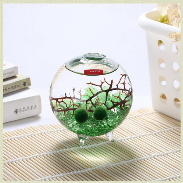 product image for Marimo Tri-Foot Terrarium Kit