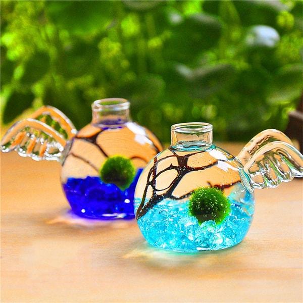 product image for Marimo Angel Aquarium Kit (Set of 2)