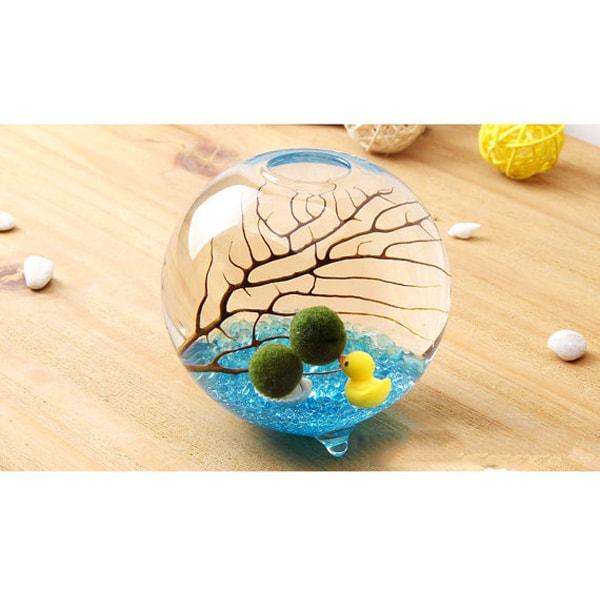 product image for Marimo Footed Aqua Terrarium Kit