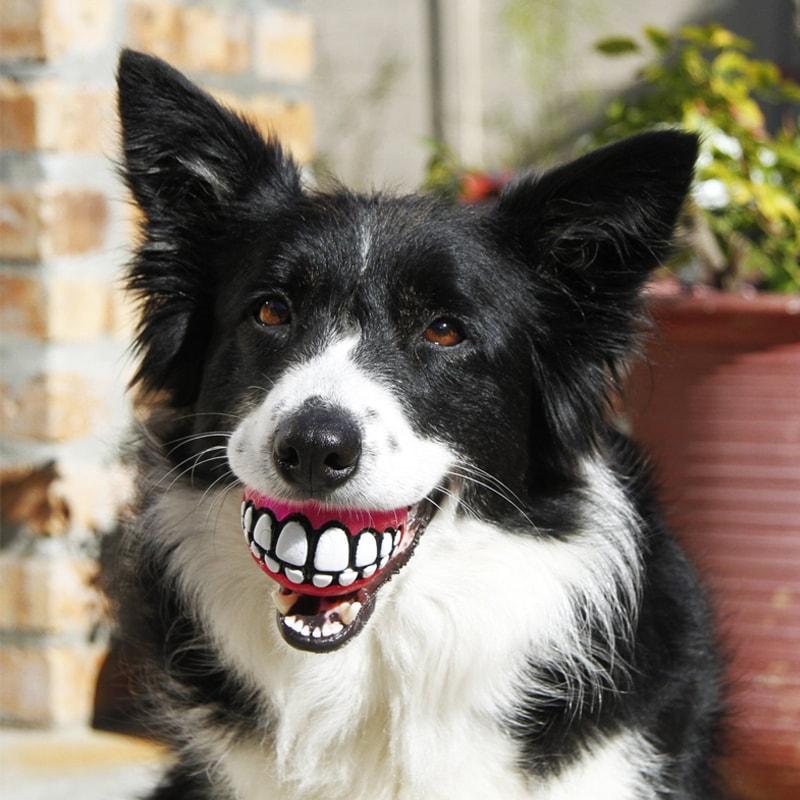 Treat Ball Dog Toy