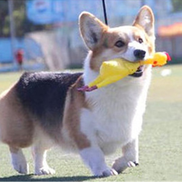 product image for Screaming Duck Toy For Pets
