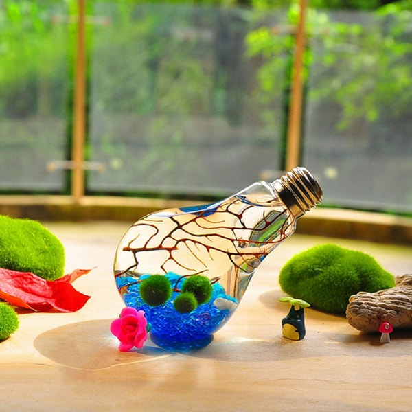 product image for Marimo Bulb Terrarium