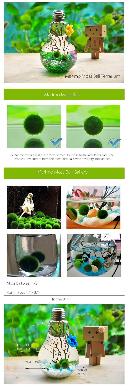 Marimo Bulb Terrarium Bring Zen to the Den