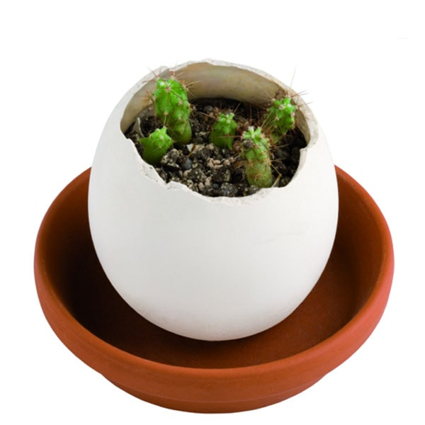 product image for Eggling