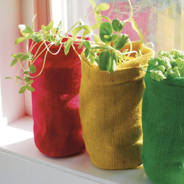 product image for Bag Plants