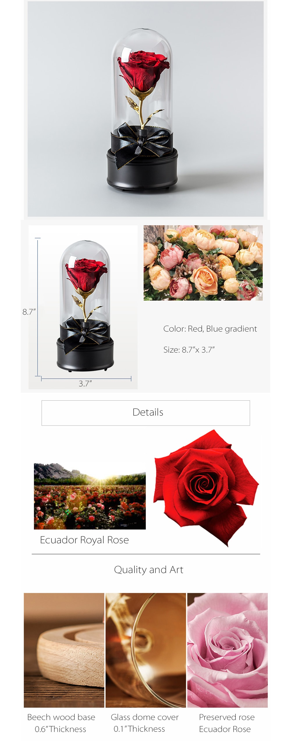 Live Rose A Perfect Gift For Your Lover