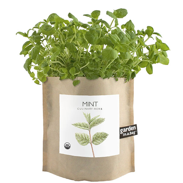 product thumbnail image for Garden In A Bag