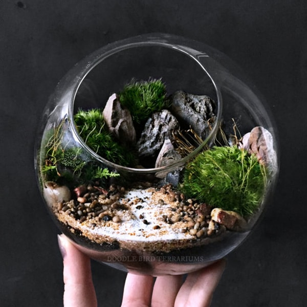 Desktop Ecosphere Moss Terrarium Orb
