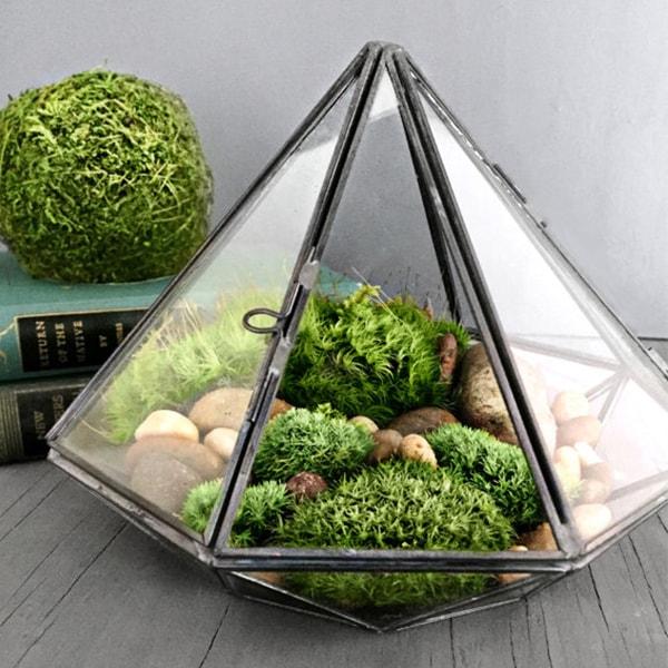 product image for Geometric Glass Diamond Terrarium with Plants