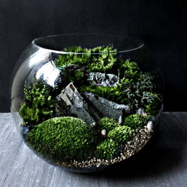 Bio-Bowl Forest World Terrarium