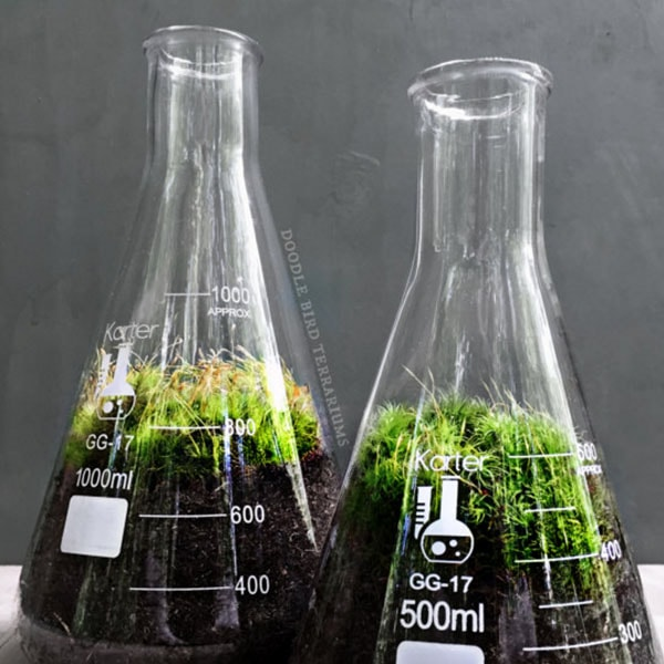 Science Flask Terrarium Set