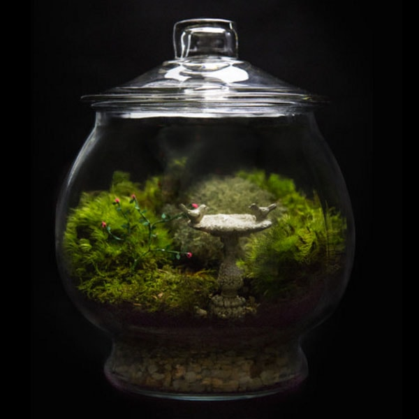 INOpets.com Anything for Pets Parents & Their Pets Rose Garden Terrarium
