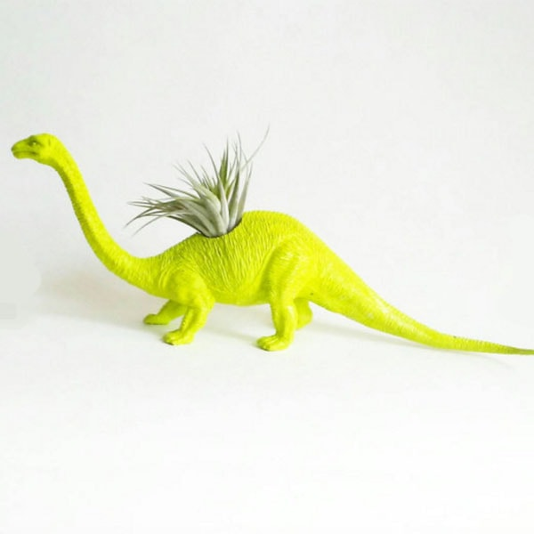 Dinosaur Planter And Air Plant