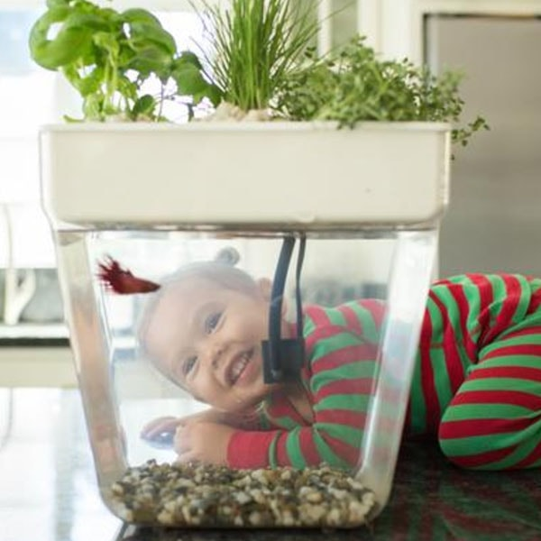 INOpets.com Anything for Pets Parents & Their Pets Water Garden 2.0