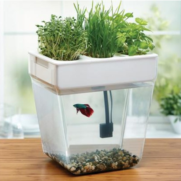 product image for Water Garden 2.0