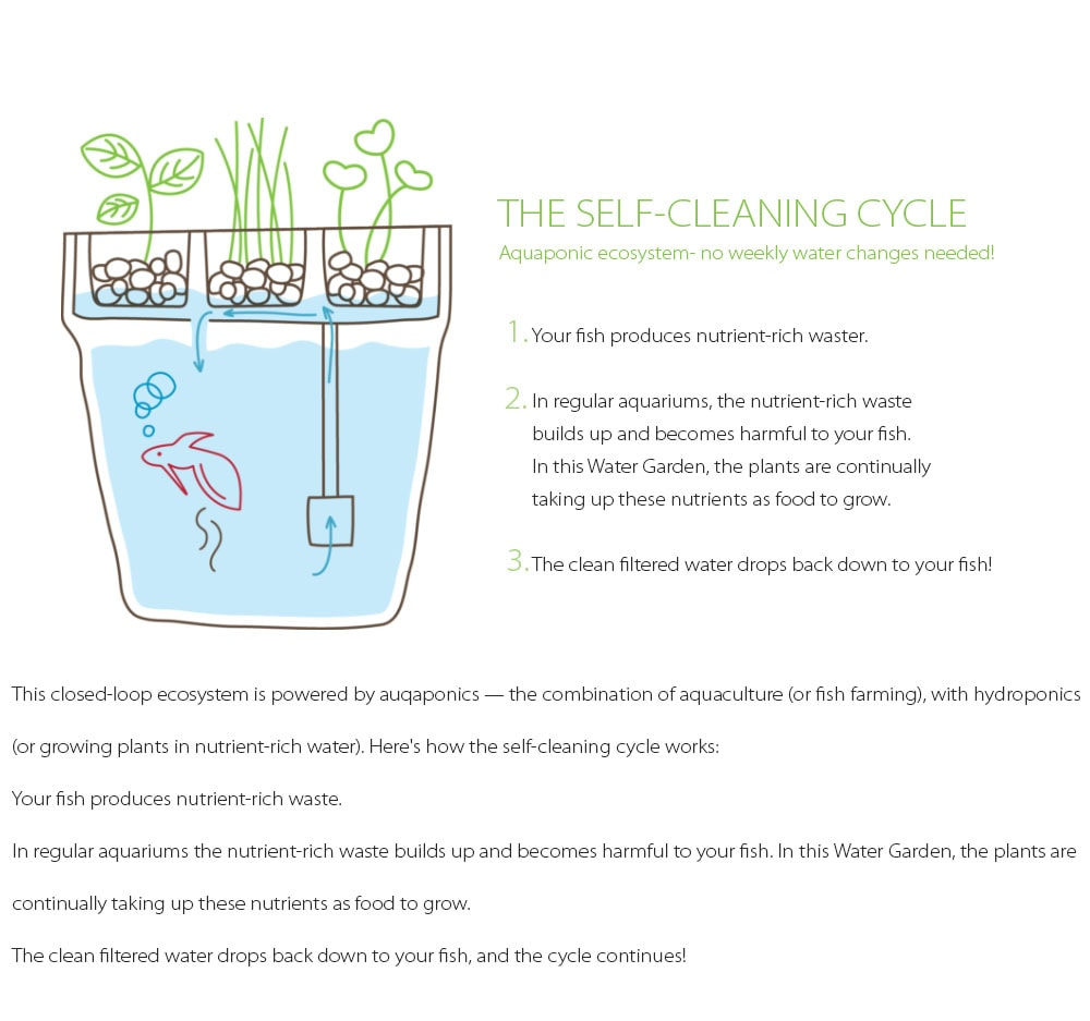 Water Garden 2.0 A Self-Cleaning Fish Tank
